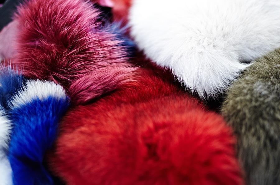 volpi colorate Saga Furs