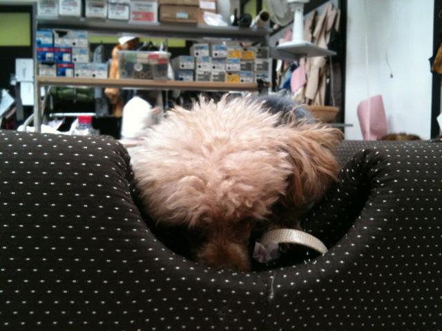 cane col la pelliccia