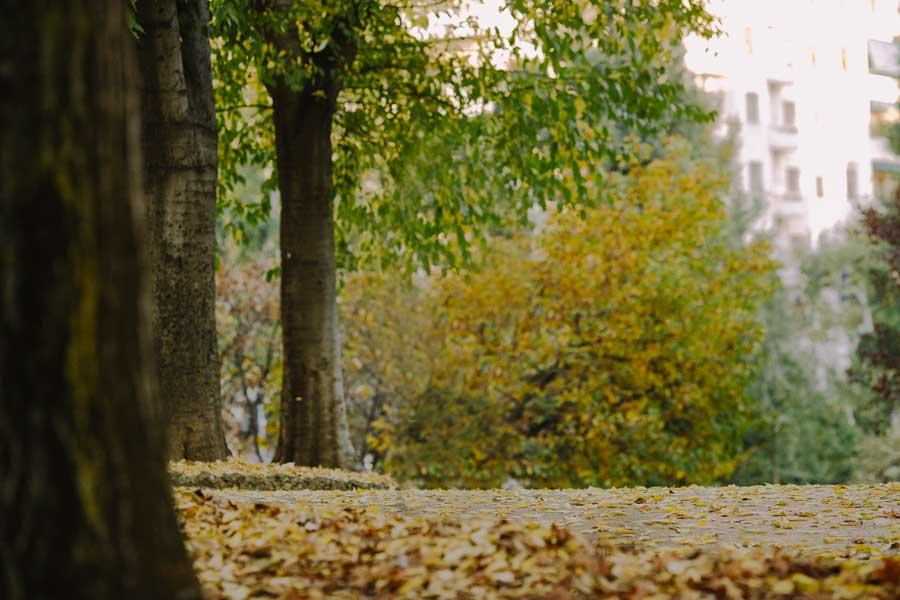 pelliccia cincillà autunno milano