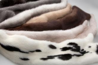 classificazione delle pellicce